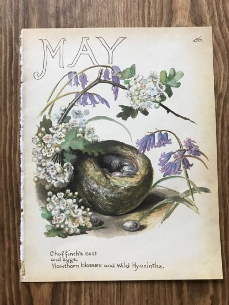 May - Country Diary of an Edwardian Lady - Book Page -